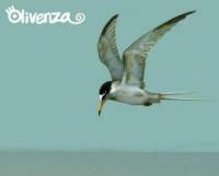 Olivenza - Olivenza